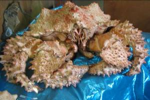 Wholesale king crab: King Crabs, Lobsters for Sale