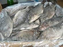 frozen seafood: Sell Frozen Wholesale Sardines Seafood Fish