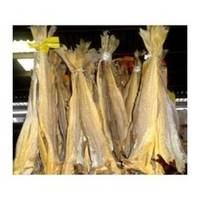 Fresh and Frozen Horse Mackerel Fish. Herring Fish. Dry Stockfish for Sale