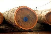Tropical Woods,Timber Supply,Pine,Teak,Eucalyptus