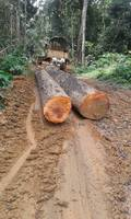 Exotic Africa Teak Logs and Sawn Timbers