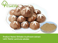 High Quality of 100% Natural Shiitake Mushroom Extract