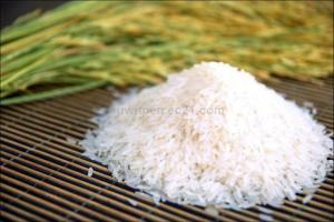 Wholesale white rice: Thai White Rice