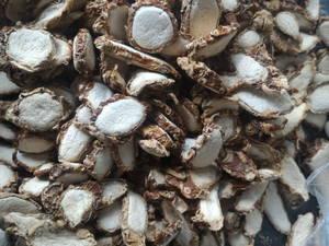 Wholesale aromatic: Slices Dried Aromatic Ginger / Kaempferia Galanga