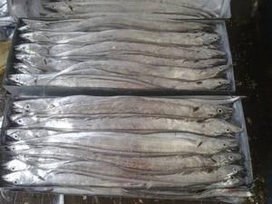 Wholesale m: Ribbon Fish