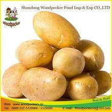 Wholesale Fresh Sweet Potatoes: Irish Potatoes with Lc At Sight As Payment Term