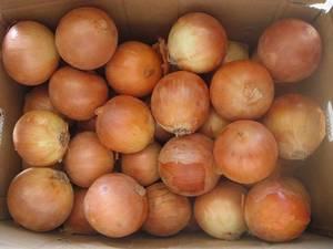 Wholesale fresh onion: Fresh Onion