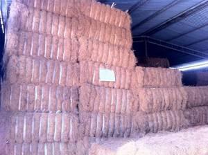 Wholesale coconut fiber: Vietnam Coconut Fiber
