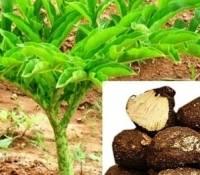 seaweed fertilizer: Sell Azadirachtin