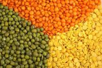 Wholesale split lentils: Red Split Lentils & Green Split Lentils , Lentils Beans Suppliers for Sale