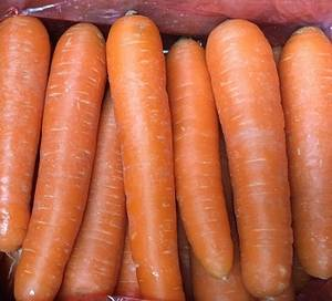 Wholesale fresh carrot: Chinese Fresh Carrot
