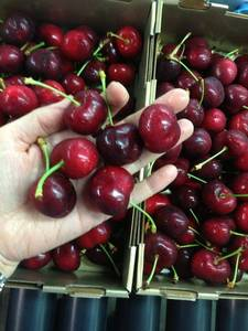 Wholesale Cherries: Fresh Sweet Cherry