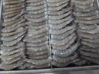 Wholesale whole frozen fish: Whole Frozen Ribbon Fish,Farmed White Shrimp,Frozen King Fish, Squid Whole