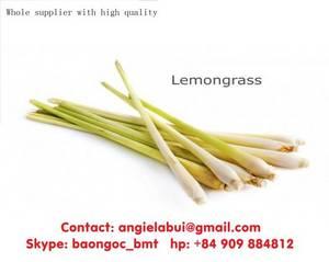 Wholesale Spices & Herbs: Lemongrass