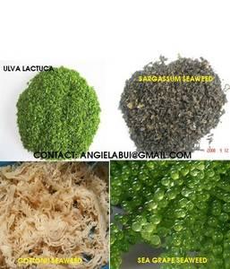 Wholesale seaweed salad: Ulva Lactuca, Sargassum, Cottonii, Sea Moss, Green Seaweed, Brown Seaweed