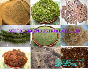 Wholesale dried ulva lactuca seaweed: SEAWEED-Animal Feed and Fertilizer