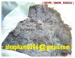 Wholesale seaweed meal powder: Gracilaria Seaweed for Agar, Gracilaria Powder