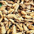 Sell Ginseng Root