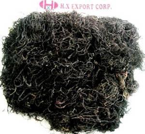 Wholesale seaweed: Raw Seaweed