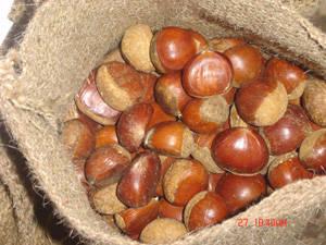 fresh chestnut: Sell chestnut