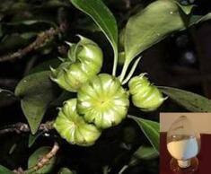 Wholesale shikimic acid: Shikimic Acid,CAS 138-59-0