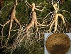 Wholesale ginseng: American Ginseng Root Extract,CAS50647-08-0