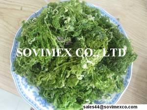 Wholesale seaweed: Seaweed