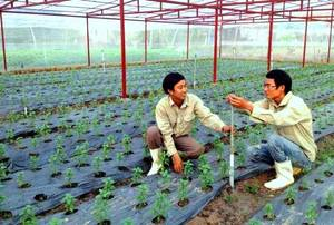 Wholesale engine: Agriculture Manpower Offer From Vietnam