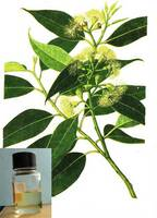 Factory Wholesale  Eucalyptus Essential Oil