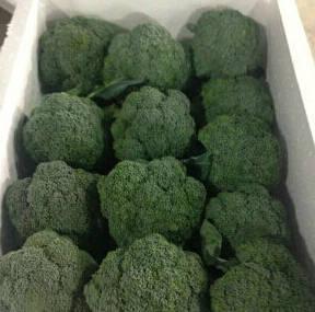 Wholesale Fresh Broccoli: Fresh Broccoli