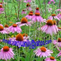 Sell Echinacea Purpurea Extract   lily@botanicalextraction.com