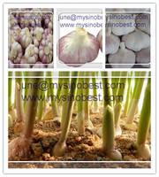 Relish Garlic 2