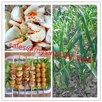 China High Quality Garlic