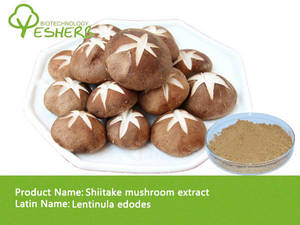 Wholesale lentinus edodes extract: Shiitake Mushroom Extract