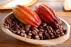 Wholesale chocolate: Cocoa Beans