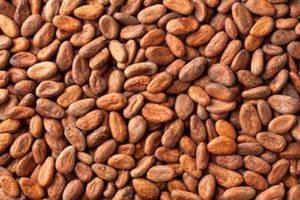 Wholesale cocoa: Grade A Cocoa Beans & Cocoa Powder