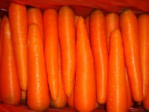 Wholesale fresh carrot: Fresh Pollution-free Green Health Carrots