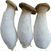Sell King Oyster Mushroom