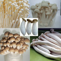 Assoeted Pack Mushroom