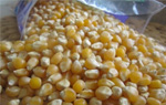 White and Yellow Maize Corn