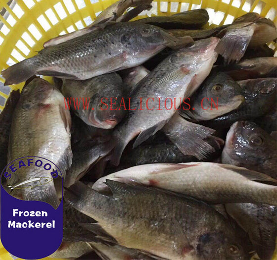 Sealicious Foods Company Limited
