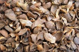 Wholesale Agricultural Waste: Palm Kernel Shell, Ginga, Pumpkin Seed(680162352)