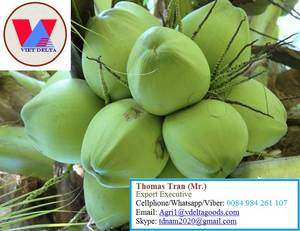 Wholesale vietnam coconut: Fresh Young Coconut - High Quality From Vietnam- +84-984261107