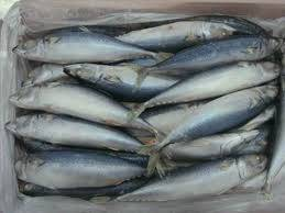 Wholesale Fish & Seafood: Fresh and Frozen Horse Mackerel Fish, Herring Fish ,Dry Stockfish