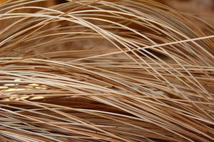 Wholesale Rattan Products: Rattan Wood