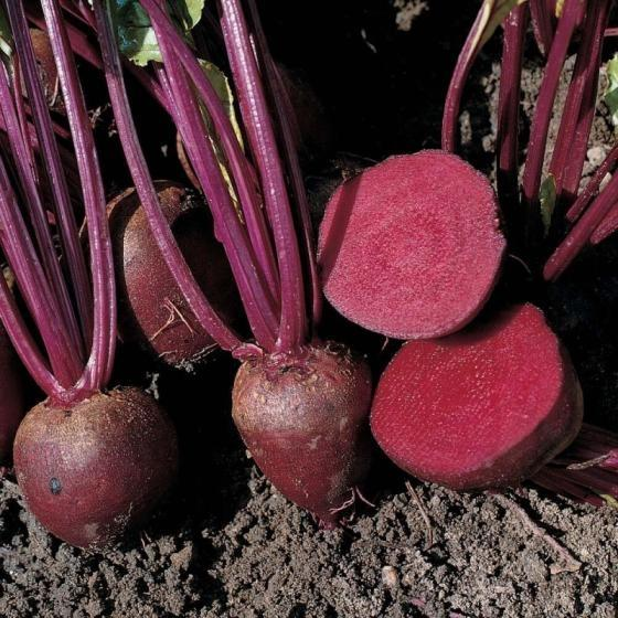 Sell Beetroot sell
