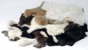 Wholesale fur scarves: Rabbit Hides