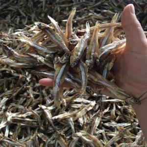 Wholesale anchovies with head headless: Best Price Dried Anchovy/ Dried Anchovies High Quality/ Manufacturor Anchovies in Viet Nam