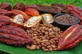 Sell cocoa