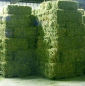 Wholesale animal feed: Alfafa Hay for Animal Feeding Stuff Alfalfa / Alfalfa Hay / Alfalfa Hay for Sale